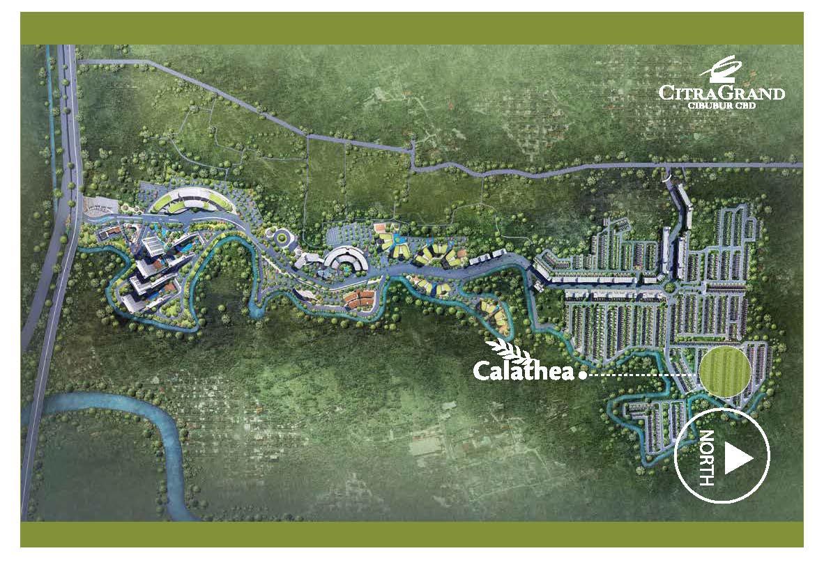 calthea